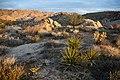 Yucca landscape (13496910144).jpg