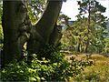 Zaľúbené stromy - panoramio.jpg