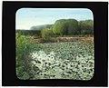 """""""Oakland Farm,"""" Alfred Gwynne Vanderbilt house, East Main Road, Portsmouth, Rhode Island. LOC 7725117906.jpg"""