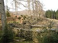 """Taking a Wall for a Walk"" - Grizedale Forest - geograph.org.uk - 36895.jpg"