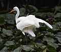 (1)Egret-7.jpg