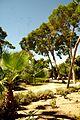 ® ┼ M.D. EL CAMPELLO VILLA MARCO JARDÍN - panoramio (19).jpg