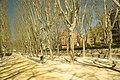 ® MADRID P.L.M. PARQUE ARGANZUELA JARDIN YESERIAS - panoramio (18).jpg