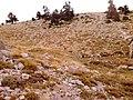 Κοντά στο καταφύγιο Δέφνερ - panoramio.jpg