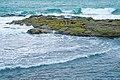 Большой баклан - Phalacrocorax carbo - Great Cormorant - Голям корморан - Kormoran (37397197082).jpg
