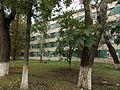 Будинок Інституту геофізики 12.jpg