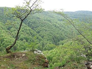 Вид на долину Аминовки сверху.jpg