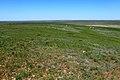 Вид с Пьяной Горы, с отметки 282 м в северо-восточном направлении - panoramio.jpg