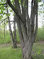 Дендрологічний парк 247.jpg