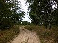 Дорога через лісосмугу - panoramio (1).jpg