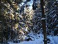 Зима - panoramio - васильки.jpg