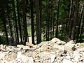Красота в райне Гребенова - panoramio (1).jpg