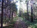 Лесная дорога - panoramio (54).jpg