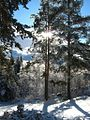 Ноябрьское солнце (November sun) - panoramio.jpg