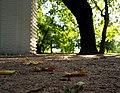 Парк Коломенское 6.jpg