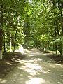 Парк в Березовій Рудці.JPG