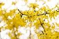 Пасхальное дерево.jpg
