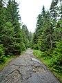 Пътя за хжа Вада - panoramio.jpg
