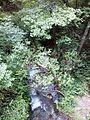 Смоларски водопад 72.jpg