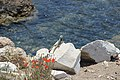 Смотреть на море любят все. Античный город Книд (Книдос). Mugla. Turkey. Июнь 2015 - panoramio.jpg