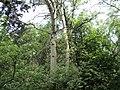 Устимівський дендропарк. Тут ростуть незвичайні дерева.JPG