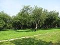 Яблоневый сад - panoramio (2).jpg