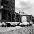 עדר כבשים ליד בית מלון בצכוסלובקיה 1937 - iדר דוד עופרi btm493.jpeg