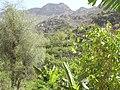 بني ورد - Bani Ward - panoramio.jpg