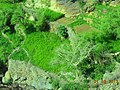 ضيعة وادي المكال تتبع قرية الاعدان اجوه حمادة 2013 - panoramio.jpg