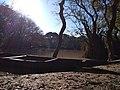 রাতারগুল জলাবন এবং একটি শীতের সকাল.jpg