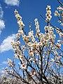 大高緑地公園 (愛知県名古屋市緑区大高町) - panoramio - gundam2345 (3).jpg