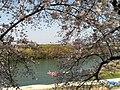 宇治川 - panoramio (4).jpg