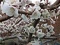 春天 - panoramio (1).jpg