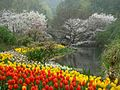杭州. 太子湾公园(樱花.郁金香) - panoramio (1).jpg