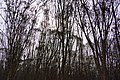 溪州費茲洛公園 Xizhou Fitzroy Gardens - panoramio (5).jpg