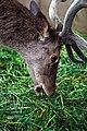 鹿 (110929811).jpeg