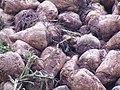 -2020-11-29 Harvested sugar beets, Trimingham (1).JPG