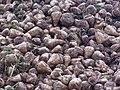 -2020-11-29 Harvested sugar beets, Trimingham (2).JPG