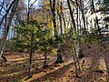 -Forest near Fioletovo village S-N 03.jpg