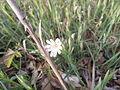 000003 Weißblühende Blumen unbekannt.JPG