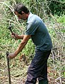 022 Mann beim Holzfaellen - Bearbeitung der Axt.JPG