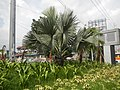 02328jfBalintawak Interchange Caloocan Quezon City FootbrindgeEDSA Roadfvf 24.jpg