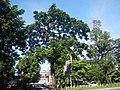 03129jfEspana Boulevard Landmarks Barangays Lacson Sampaloc Manilafvf 02.jpg