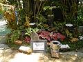 05557jfMidyear Philippines Orchid Exhibits Quezon Cityfvf 27.JPG