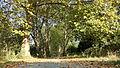 09046179 - Platanenaltbaumbestand - St. Thomas Kirchhof I 01.jpg