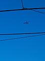 1.24.14ABCNewsHelicopterByLuigiNovi6.jpg