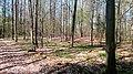 10 Grabhügelgruppe im Waldstück Hainbach.jpg