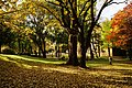 131103 Hokkaido University Sapporo Hokkaido Japan03bs.jpg