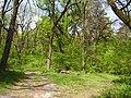 14.05.2006 - територія заказника Чернечий ліс (6).jpg