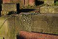 1527aviki Cmentarz żydowski przy ul. Lotniczej. Foto Barbara Maliszewska.jpg